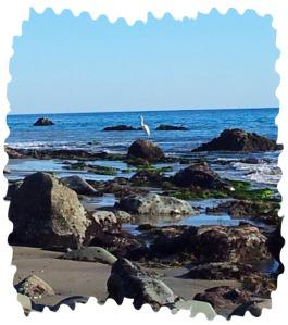 2014-01-15 tide pool5