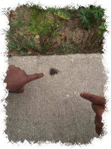 pcola-bumblebee