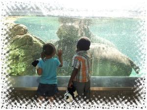 EL zoo1